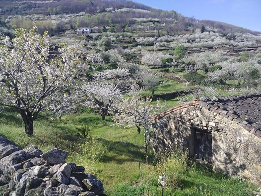 casa-de-arcos-cerezo-flor